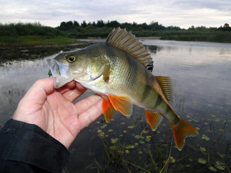 Резкое похолодание испортило рыбалку, но чутка поймал
