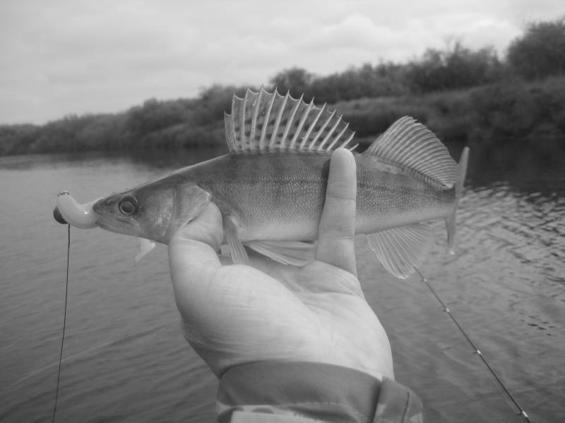 Рыбалка в последние дни лета. Отчеты.