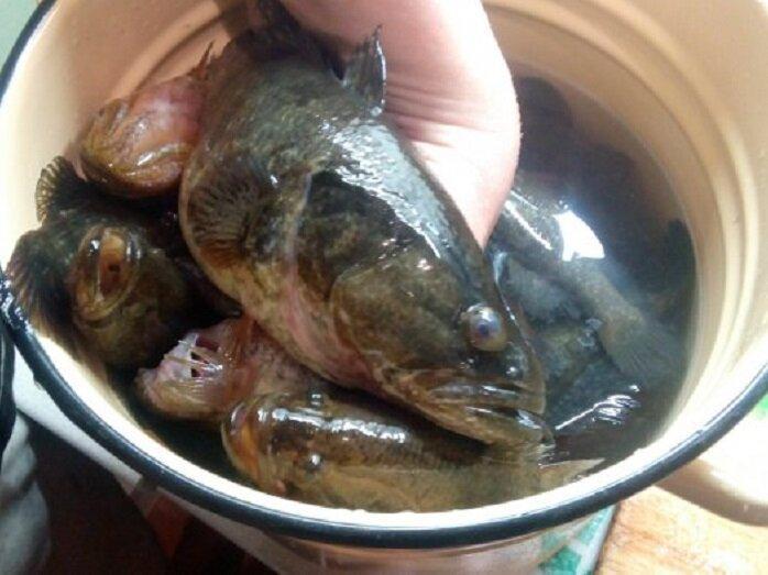 Три вида рыб, которые даже бывалые рыболовы не едят из-за предрассудков