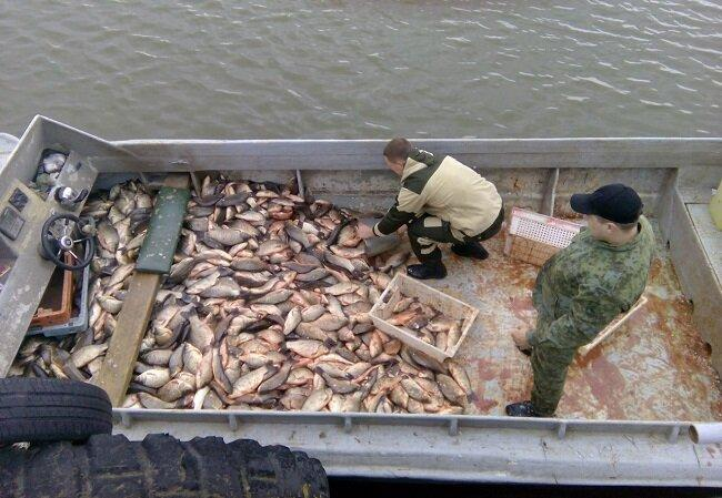 3 причины почему в отечественных водоемах все меньше рыбы. Мое мнение