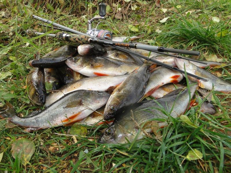 Можно ли поймать осенью в такой мелководной заводи рыбу